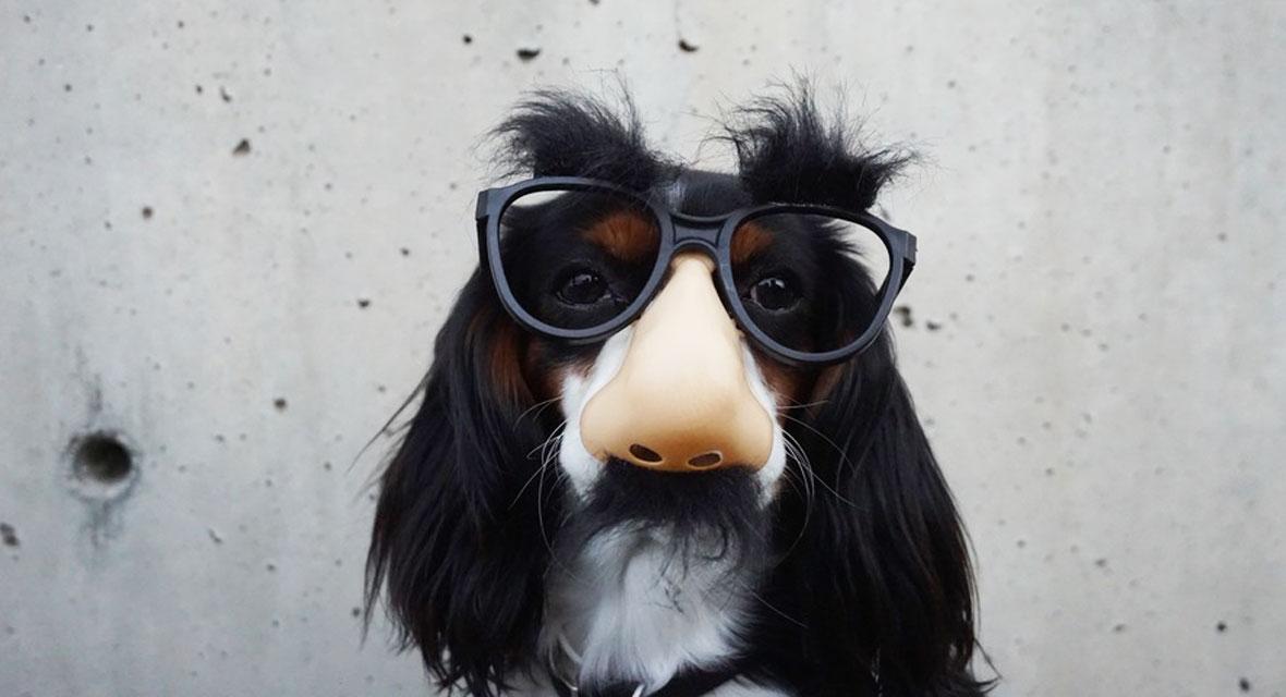 Die coolsten Halloween Hundekostüme