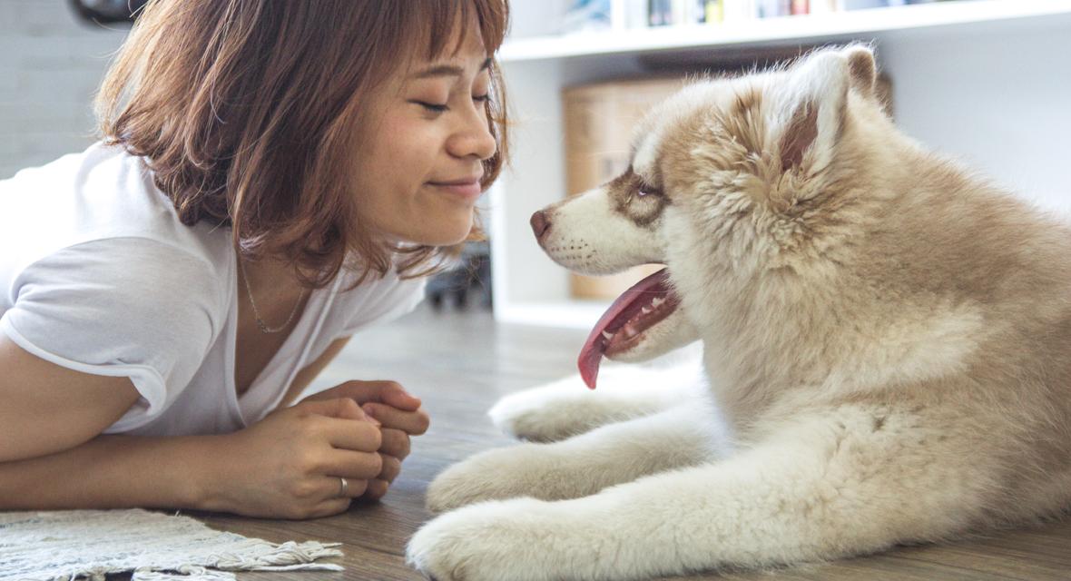 Die schönsten DIYs für dein Haustier