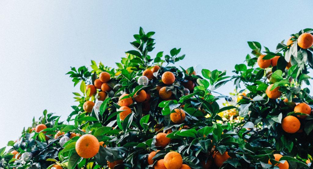 Orangen Badeöl selbst herstellen und entspannen