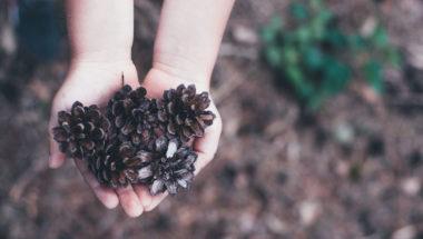 Basteln mit Naturmaterialien: Tannenzapfen