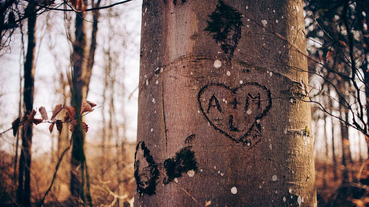 Eingeritzte Namen in einem Baum