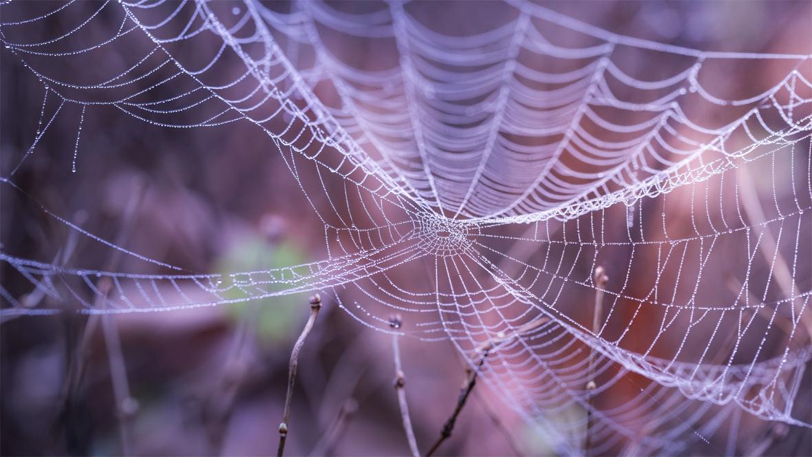 Spinnennetz hängt zwischen Ästen