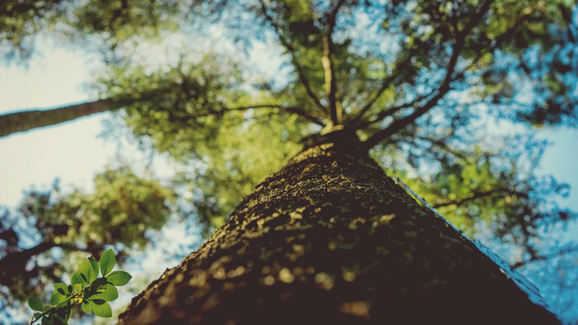 Baum aus Froschperspektive