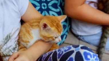 Kinder mit Kätzchen auf dem Arm